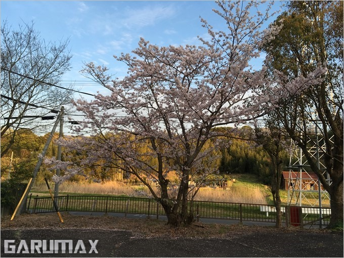 garumax-iPhoneSE-sakura (16)