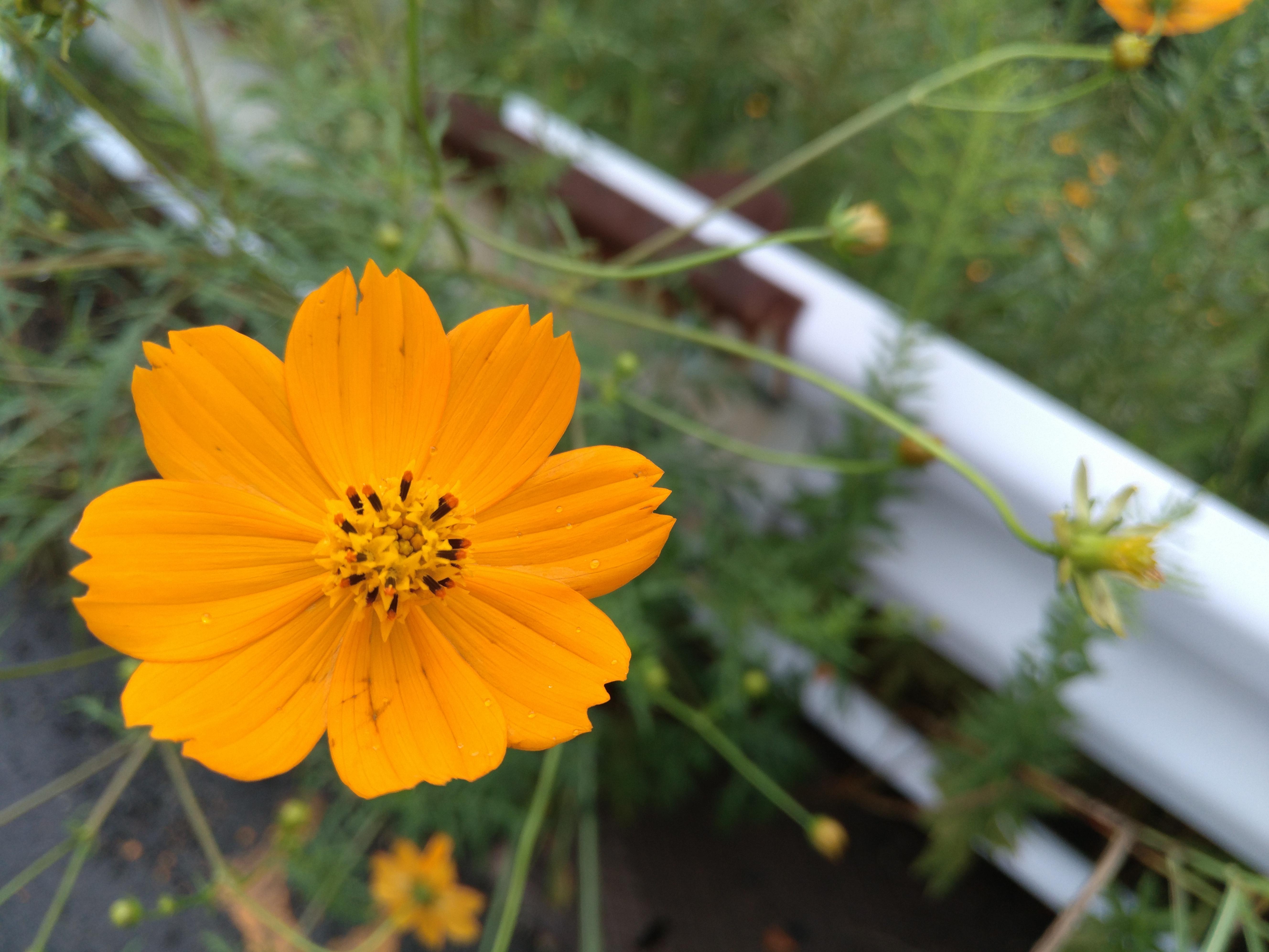 LeTV Leeco Le Max 2では風邪に揺れる花も的確にピントが合う