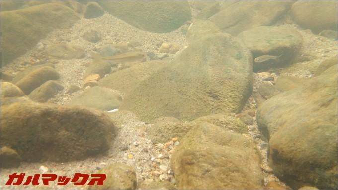 BV6000sで水中を撮影してみました
