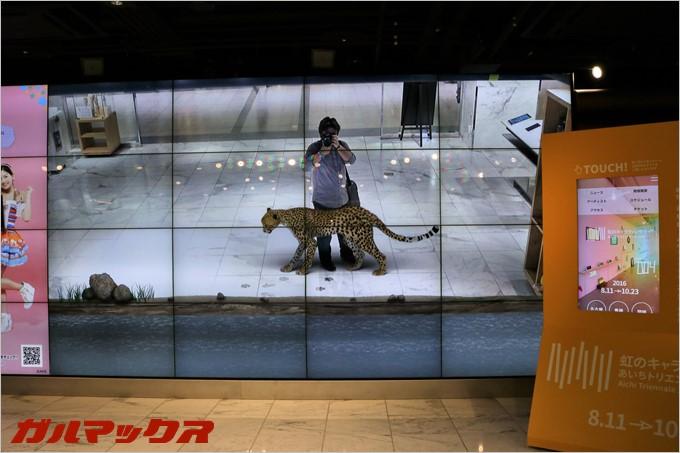 画面の中で動物と戯れる事ができます