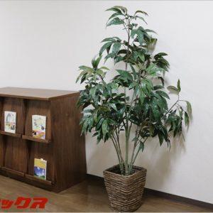 光触媒観葉植物を部屋に置いて空気清浄!オシャレ感もアップ!