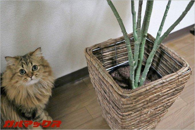 いつも猫パンチを打ち込みまくっているジョコさん。あ、このお洒落な入れ物もセットでした。