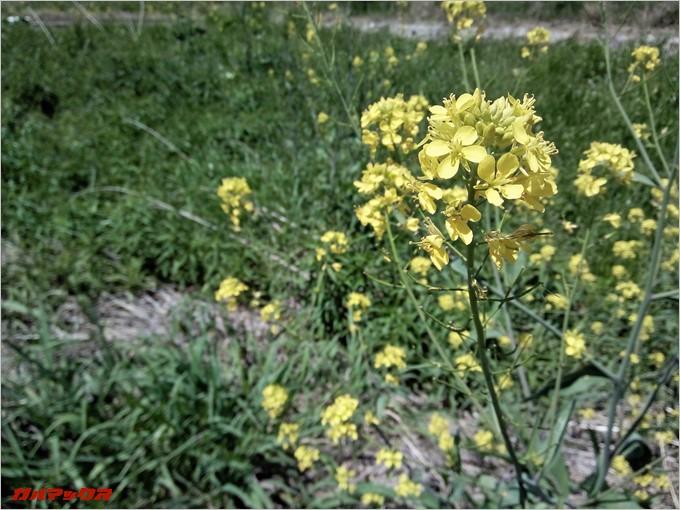 黄色い花もピントバッチリで撮影できます。