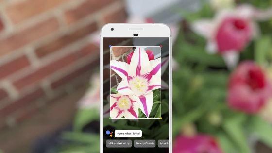 Google Lensで花を映すと名前を教えてくれる