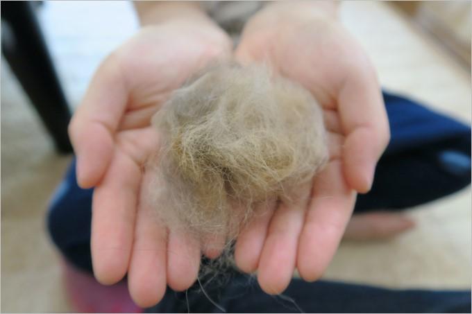 少しブラッシングしただけで非常に多くの抜け毛が取れました。