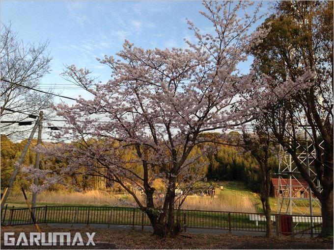 garumax-iPhone5-sakura (1)