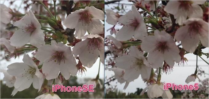 garumax-iPhoneSE-5-hikaku