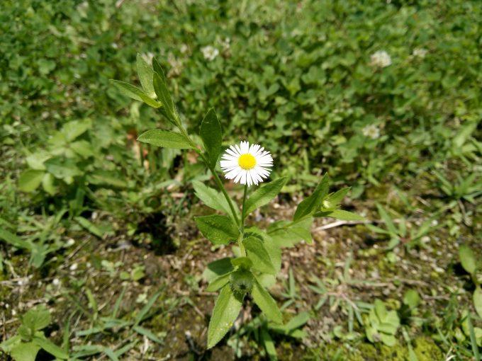 UHANSのS1で植物園で花を撮影