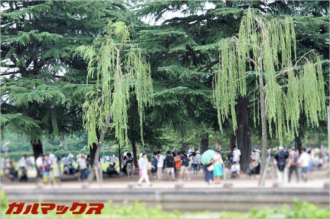 ポケモンGOの聖地、鶴舞公園は何処に行っても人だらけ