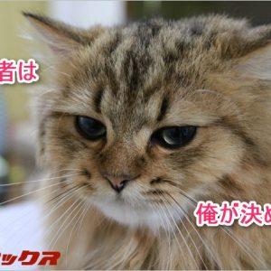 中華スマホプレゼント企画の当選者発表!