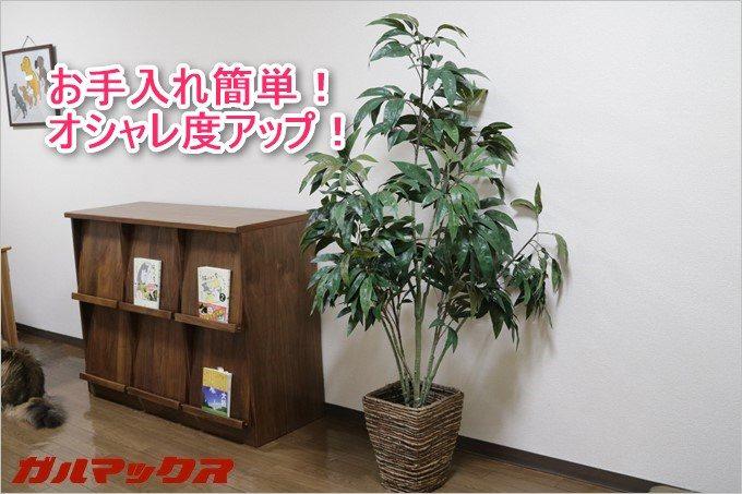 お手入れ簡単な光触媒観葉植物!